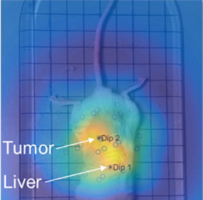 MRX dipole map in mouse showing BT474 tumor signal